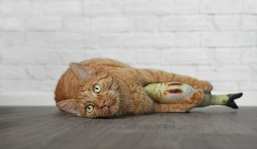 cat holding fish toy