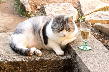 cat asleep near a glass.