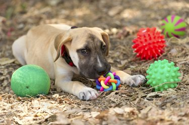 Dog surrounded by toys outside