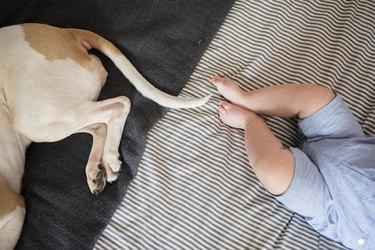 New York, Brooklyn, Baby boys (6-11 months) feet next to sleeping dog