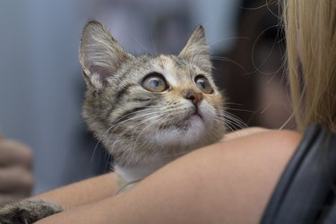 Frightened kitten in the hands of a volunteer