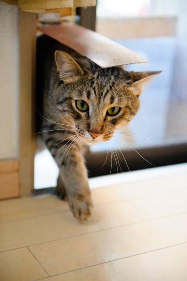 cat going through cat door