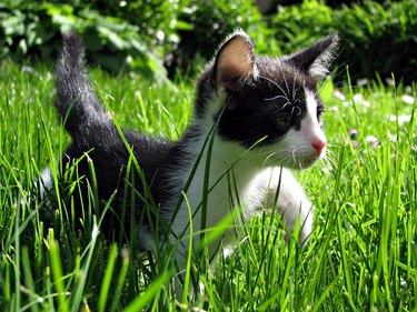 Close-Up Of Kitten Walking On Grassy Field