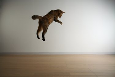 Cat Jumping Down