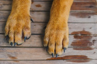dog paws on wooden deck
