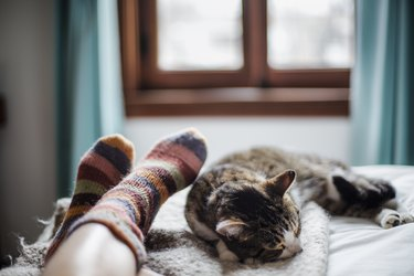 cat on a bed feet of a person