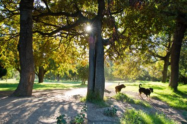 Footpath in dog park