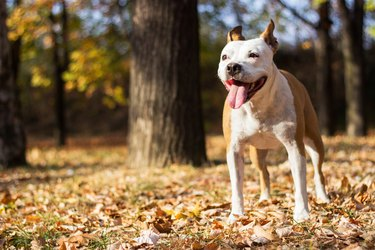 Happiness dog portrait