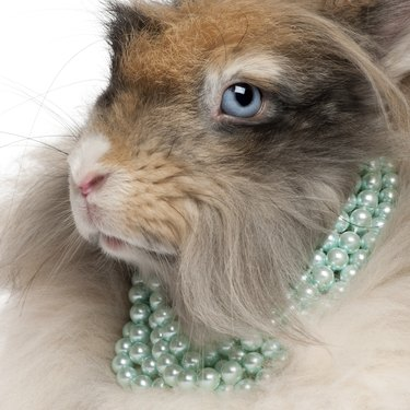 Close-up of English Angora rabbit wearing pearls