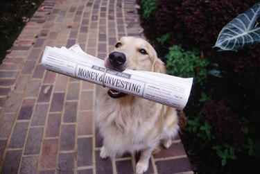 Golden retriever w/ newspaper in its mouth