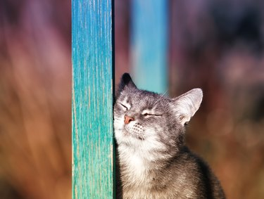 striped kitten rubs against a wooden beam in the yard in the Sunny spring garden closing his eyes with pleasure