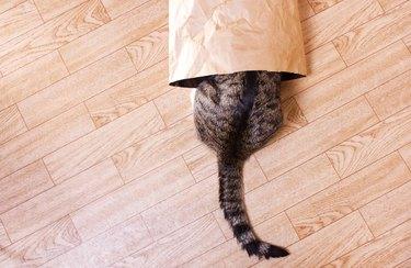 striped cat hiding in a bag