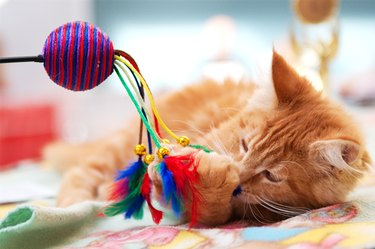 Kitten playing with ball and feathers