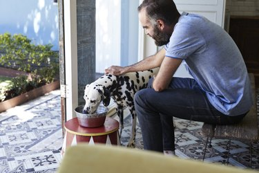 Man giving his Dalmatian dog water in a bowl