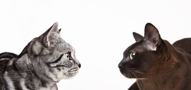 Cats looking at each other