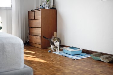 Cat with pet supplies in a bedroom