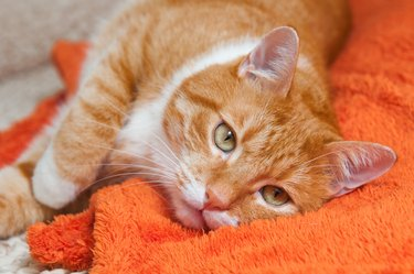 red cat lying on orange blanket