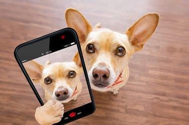 close up curious dog looks up selfie