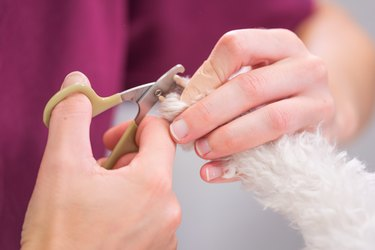 Unrecognizable veterinarian is trimming nails dog, close-up.