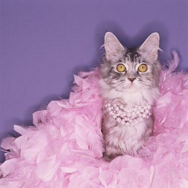 Cat wearing boa and pearls