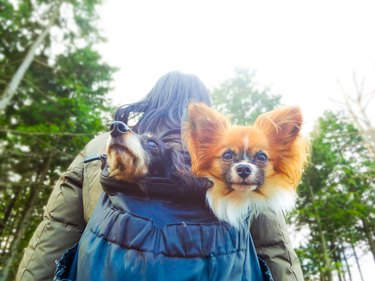 Asian women and dogs in the outdoors