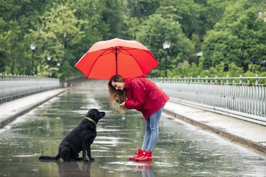 Beautiful girl with umbrella talking to a dog