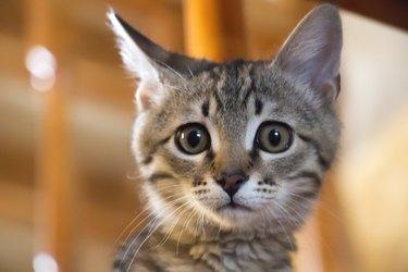 A little naughty kitten