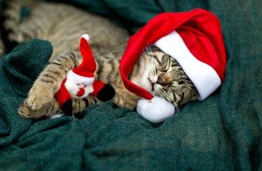 Cat baby with cap