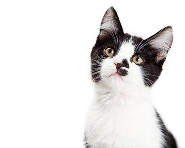 Portrait of Adorable Kitten Tilting Head