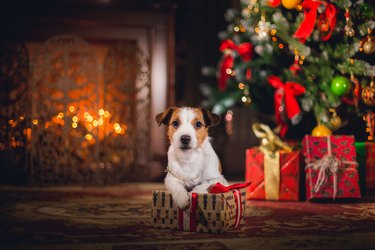 Puppy with a present
