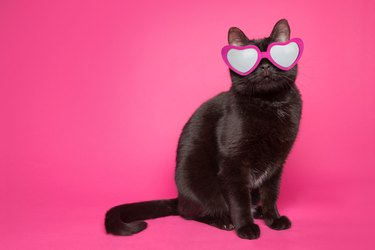 Black Cat Wearing Heart Glasses on Pink Background