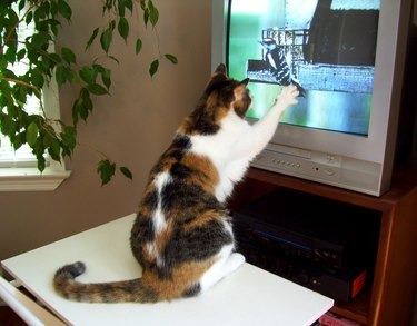 Cat Reaching for Bird on Television