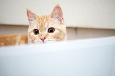 cat is looking
