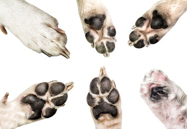 Close up of dog paws isolated on white background. dog and puppy paws set isolated on white