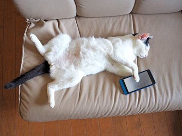 Cat Felll Asleep While Using Smartphone