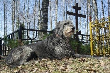 dog near grave