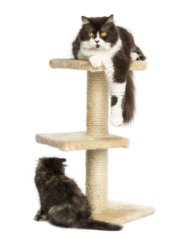 Cats on a cat tree, isolated