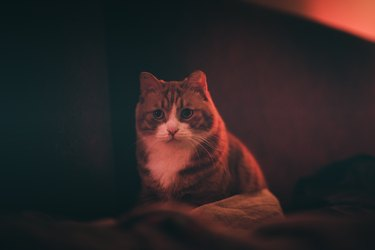 A ginger cat looking at you in night.
