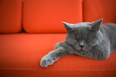 A gray cat lying on a red sofa.