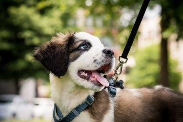 Close-Up Of Dog Looking Away At Park