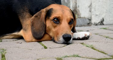 Close-Up Of Dog Relaxing On Footpath