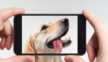 Labrador retriever in a mobile phone
