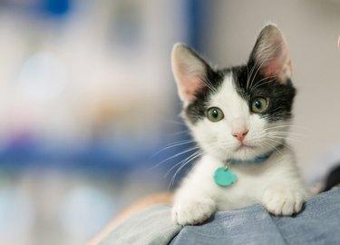 Beautiful rescued kitten