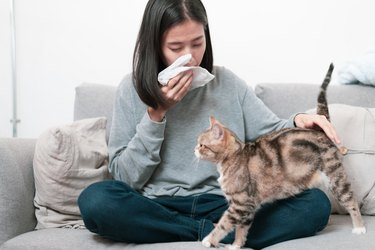 Cat owner and her cat sitting on a sofa. Young Asian woman has a running nose symptom problem because a cat allergy problem.
