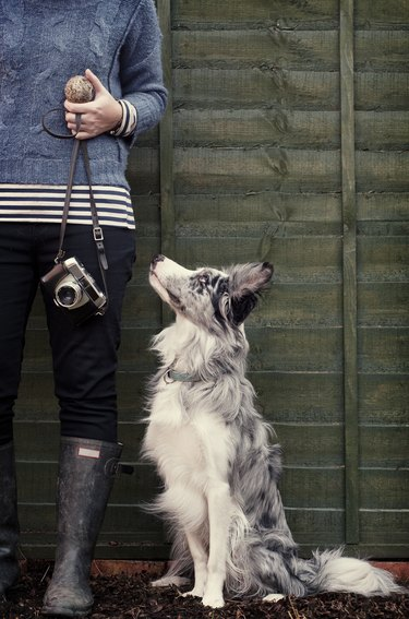 Border Collie dog with owner