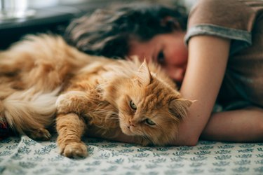 Hairy cat and young woman resting on sofa at home