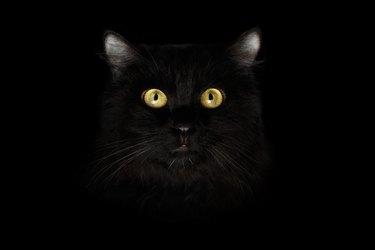Closeup Scared Black Cat Face, Yellow Eyes in Dark