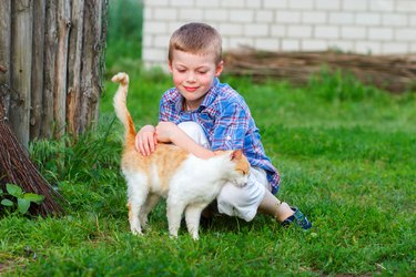 Ginger cat tenderly rubs against the foot of a boy