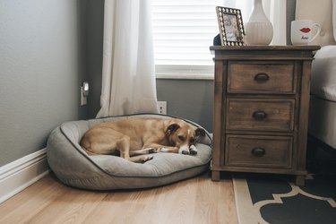 Dog lying on pet bed by window at home