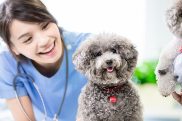 pet dog and the vet